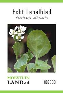 Lepelblad echt zaden kopen, Zeeradijs bio biologisch   Moestuinland