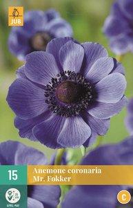 Anemone Anemoon bloembollen kopen, Mr. Fokker blauw   Moestuinland