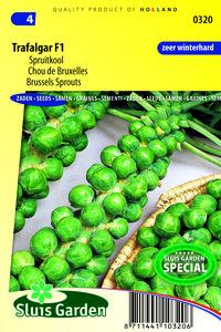 spruitkool zaden (spruitjes) | Moestuinland