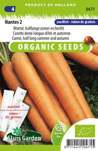 Zaailint wortels kopen | Stevige wortels