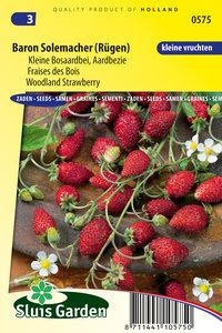 Aardbei zaden kopen - moestuinland