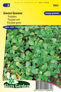 Postelein zaden kopen, gewone groene   Moestuinland