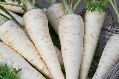 zaden voor wortel peterselie kopen - moestuinland