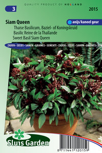 Thaise basilicum zaden kopen, siam queen sierbasilicum | Moestuinland