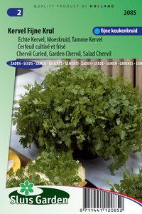 Kervel zaden kopen, fijne krul | Moestuinland