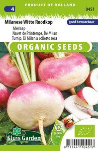 Meiraap zaden kopen biologisch, Milanese witte roodkop | Moestuinland
