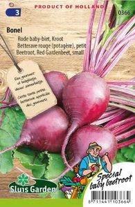 Rode bieten zaden kopen, baby-biet Bonel   Moestuinland