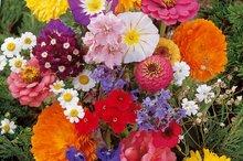 Biologische bloemen zaden kopen voor in de tuin of moestuin mix snijbloemen zaden kopen