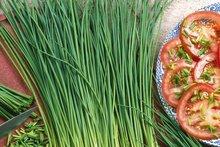 bieslook zaden kopen - moestuinland