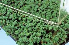 gewone tuinkers zaden kopen - moestuinland
